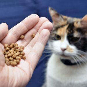 Karmy dla wybrednych kotów i psów - czy naprawdę warto je podawać?