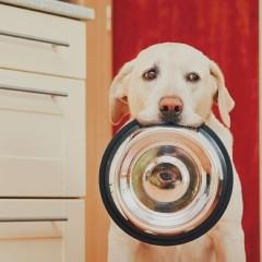 Przewodnik żywienia. Jak wybrać najlepszą karmę dla psa i kota