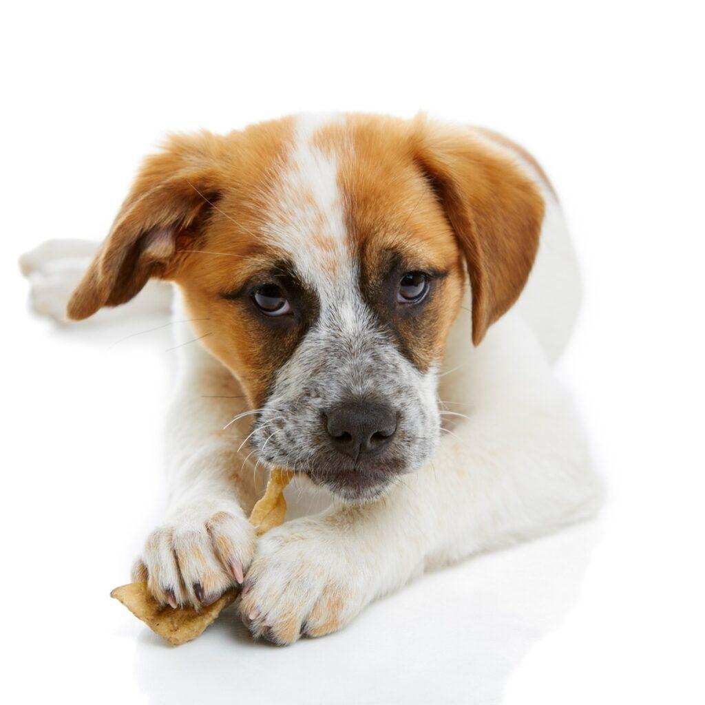 Gliceryna w przysmakach z Chin dla psów i kotów. Powolna trucizna czy neutralny dodatek?
