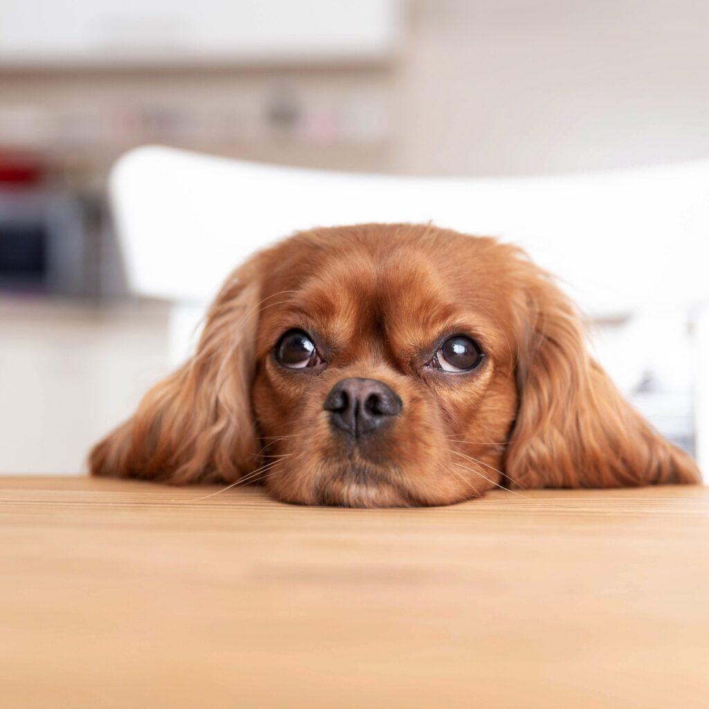 Sposób produkcji karmy. Czego nie wiesz o 95% suchych karm dla psa i kota?